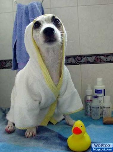 Wanna Bath