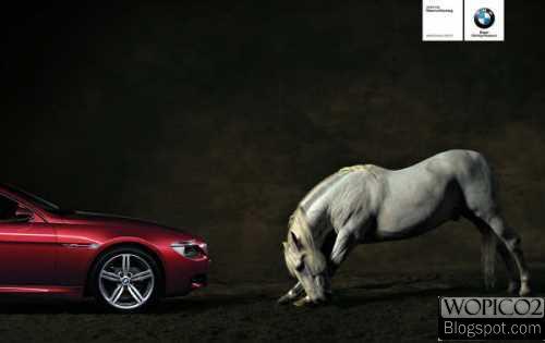Surendered Horse