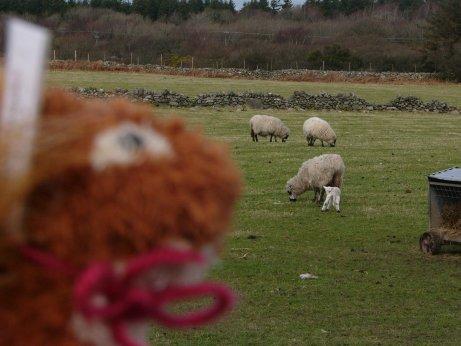 http://lh6.ggpht.com/_7ODftPSZPsY/S6pYGjcRTtI/AAAAAAAAAiI/Zwtg9j-BWhs/sheep1.jpg