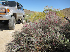 LandCruiser in Carrizo Gorge - Anza Borrego