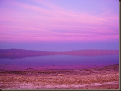 purple haze sea