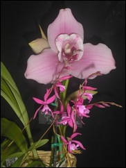 2008 orchid show 007