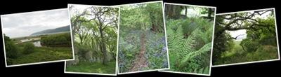 View Ynis Hir reserve