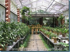 Orchid Garden (14)