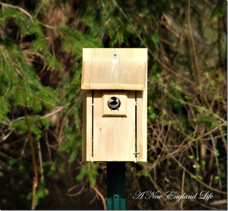Chickadee box
