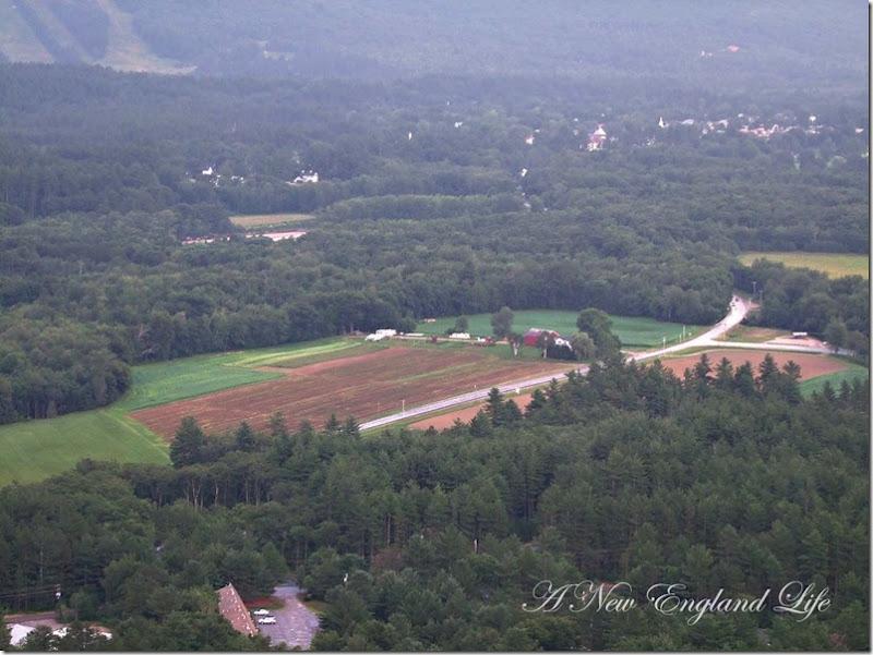 CL farm