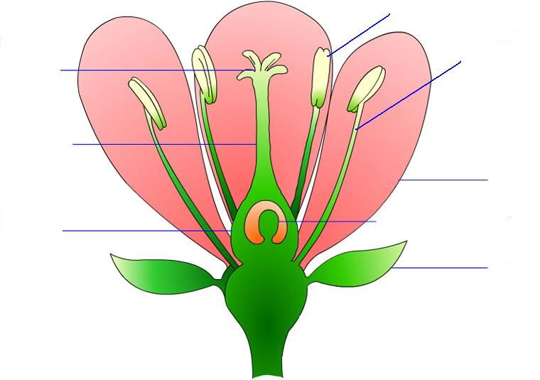 flower parts and pollination worksheet