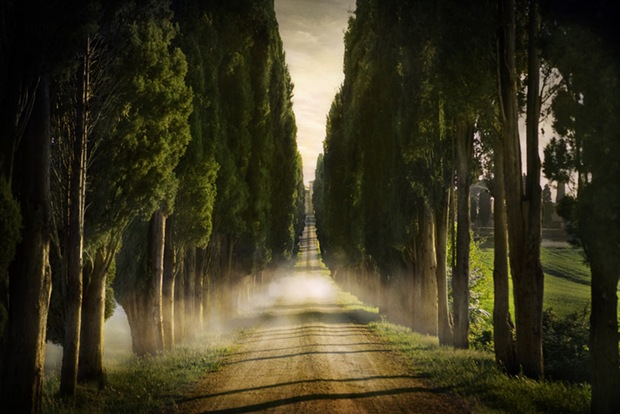 Photography of a road through the green and trees in Siena, Italy
