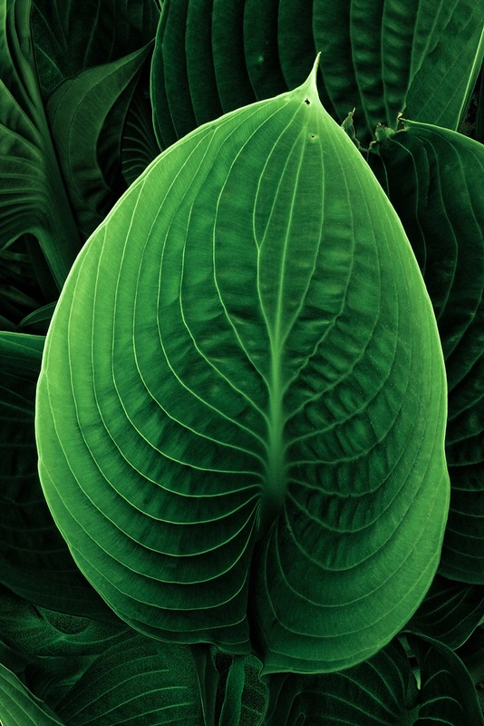 Green-leaf-micro-photography