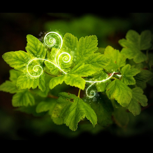 Green leaf Apple ipad Wallpaper