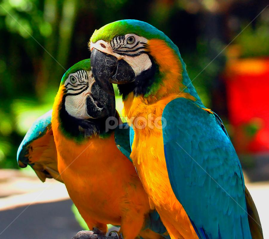 by Cacang Effendi - Animals Birds ( cattery, chandra, travel, birds, animal )