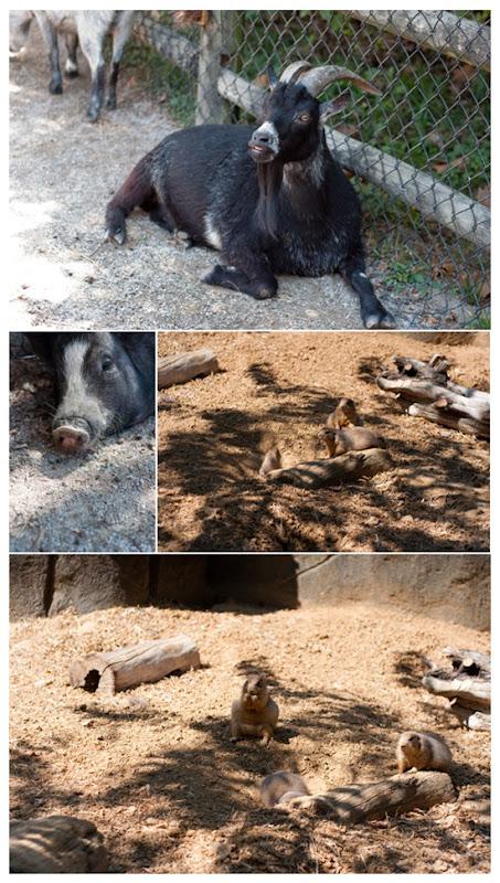 zoo_4