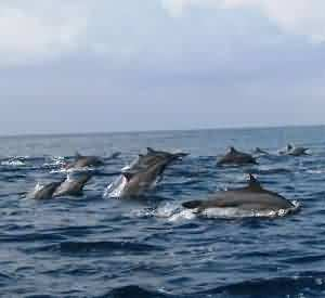Kiluan Gulf , The Dolphin's Heaven
