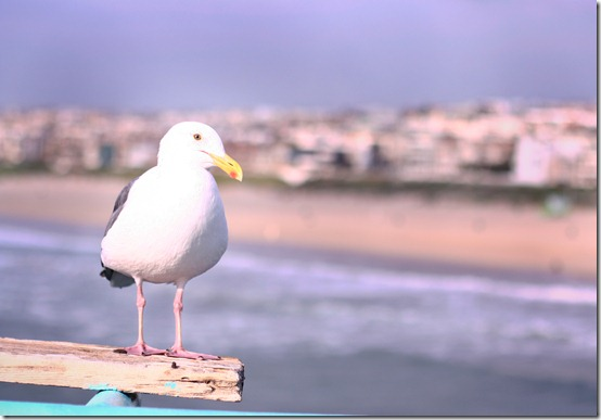 seagull (1 of 1)