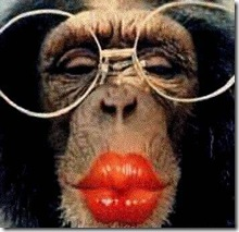 macaco-beijo