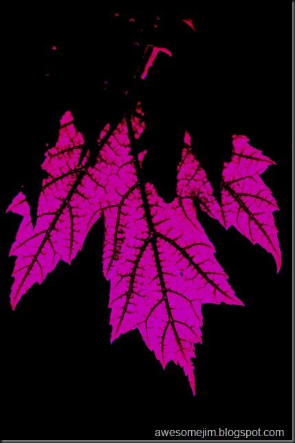 pinkleaf