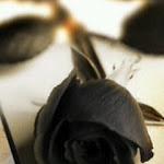 blackrose_3a6eia76_01.jpg
