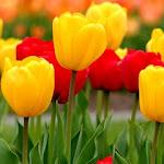 Flower_3812.jpg