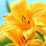 Flower_3925.jpg