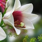 Nice_Flower_1443.jpg