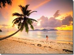 praia,praia linda,coqueiro