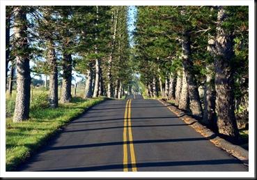 western-highway
