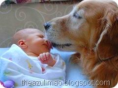 Cão Terapia