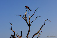 2010_12_17 Yala National Park 029.JPG Photo