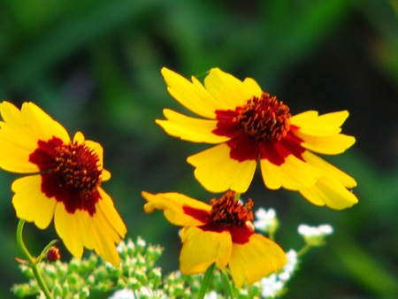 yellowredflowers