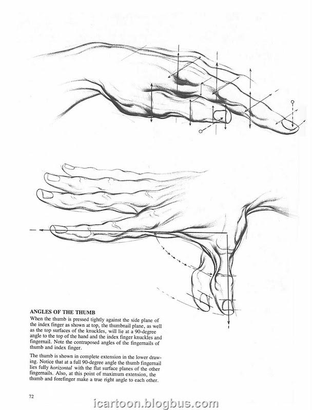 动态素描 手部结构02