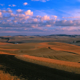 Charred crop patterns and big sky. by Gale Perry - Landscapes Prairies, Meadows & Fields (  )