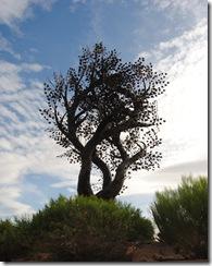 tree of life 003