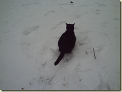 Winter 2010 002