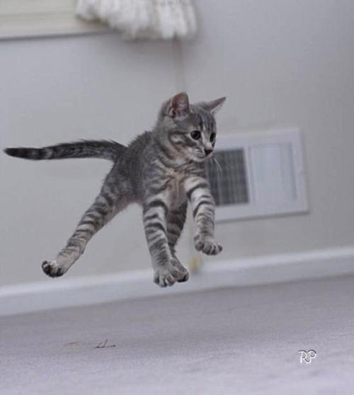 kitten-soars