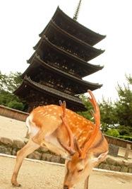 Kioto y Nara 043