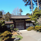 Japanese Gardens in The Golden Gate Park