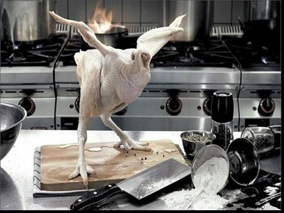optimistic chicken