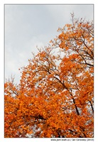 barevny_strom