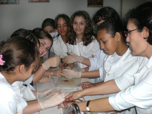 2010 – 7°Ano – Laboratório – Anatomia e fisiologia de um peixe ósseo