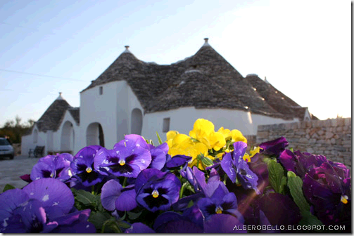 trullo pansies