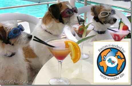 martini dogs