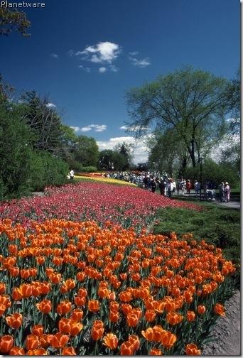 canadian-tulip-festival-ottawa-onot057