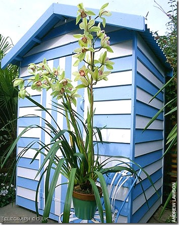 gardening-shed telegraph co uk