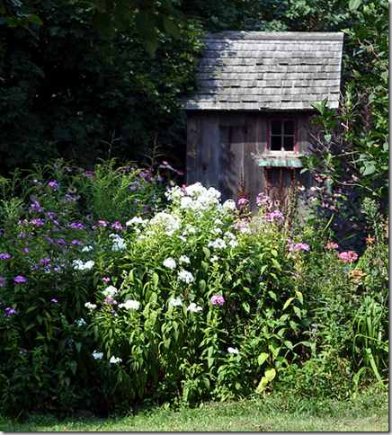 garden shed white flowers flickr