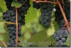 IMG_5101-grapes