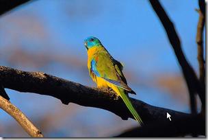 parrot flickr 2