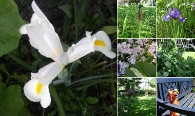 View Roni's Garden