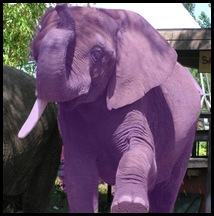 purple-elephant