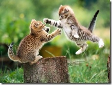 funny-cat-fight[5]