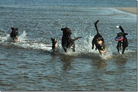 carol dogs 2